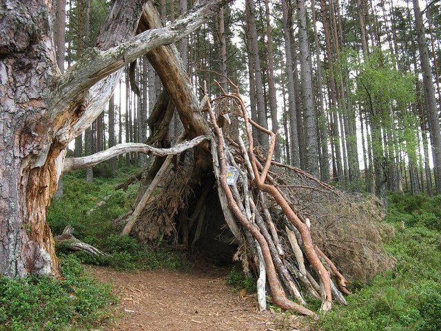An improvised shelter made of sticks leaning against a tree