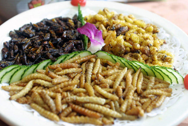 An attractive plate full of delicious looking insects