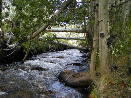 A stream with several trees around it.